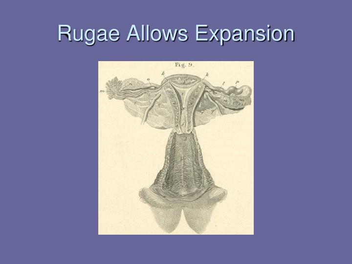 Rugae Allows Expansion