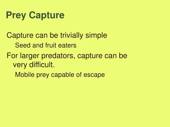 Prey Capture