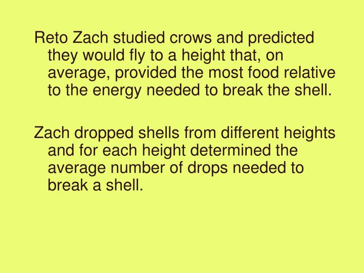 Reto Zach studied crows and predicted they would fly to a height that, on average, provided the most food relative to the energy needed to break the shell.