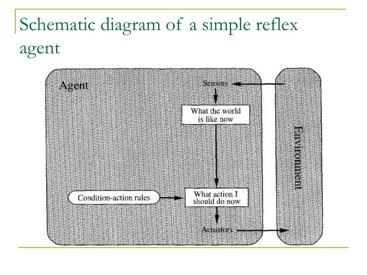 Schematic diagram of a simple reflex agent