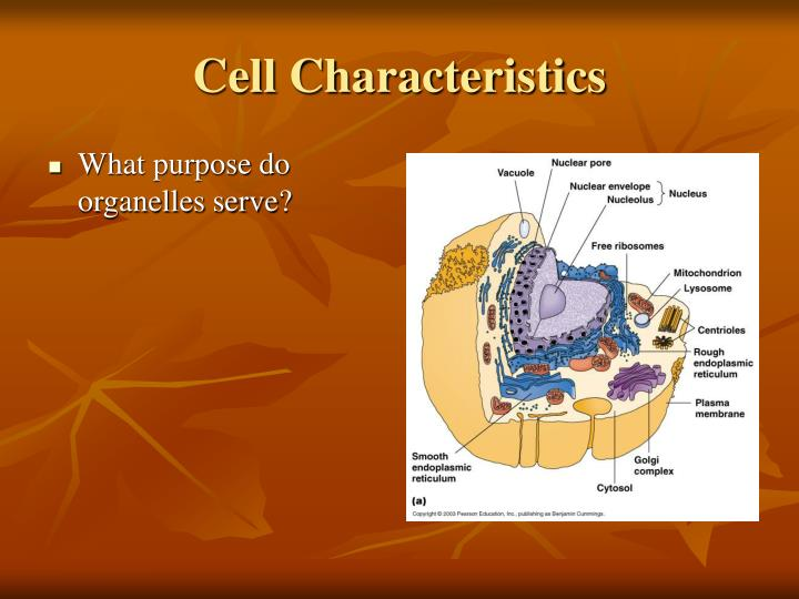 Cell Characteristics