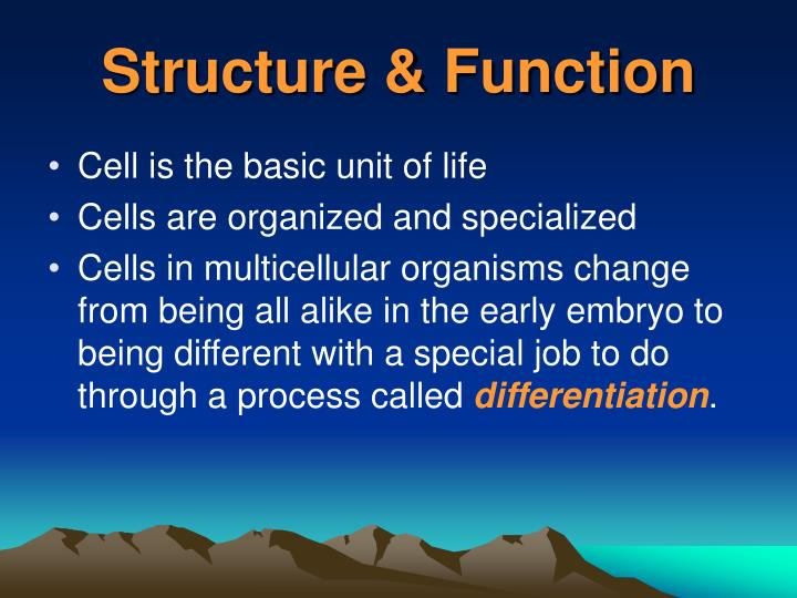 Structure & Function
