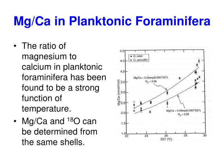 Mg/Ca in Planktonic Foraminifera