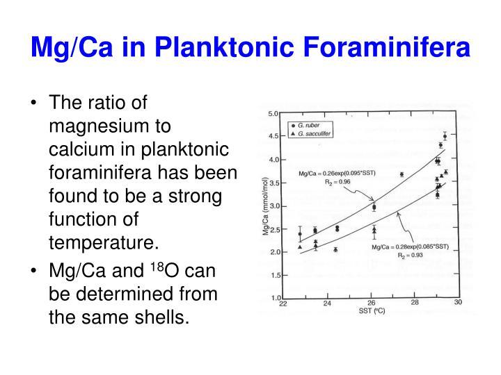 Mg/Ca in Planktonic Foraminifera