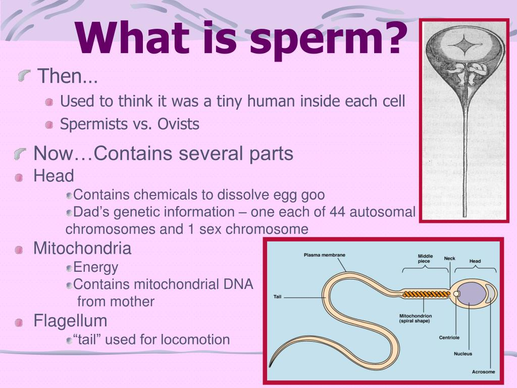 What is sperm?