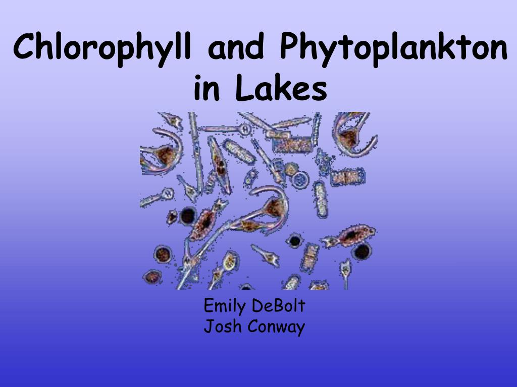 Chlorophyll and Phytoplankton