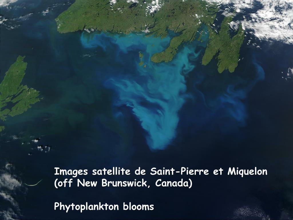 Images satellite de Saint-Pierre et Miquelon