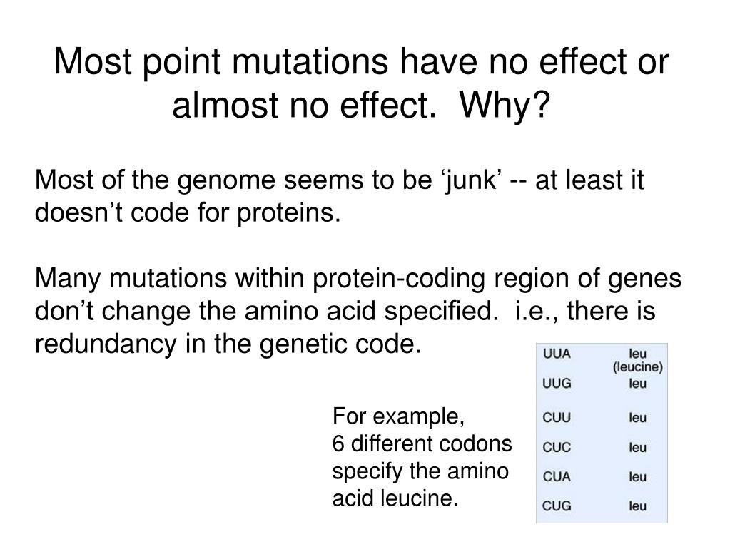 Most point mutations have no effect or almost no effect.  Why?