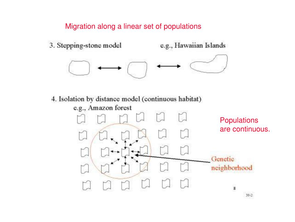 Migration along a linear set of populations