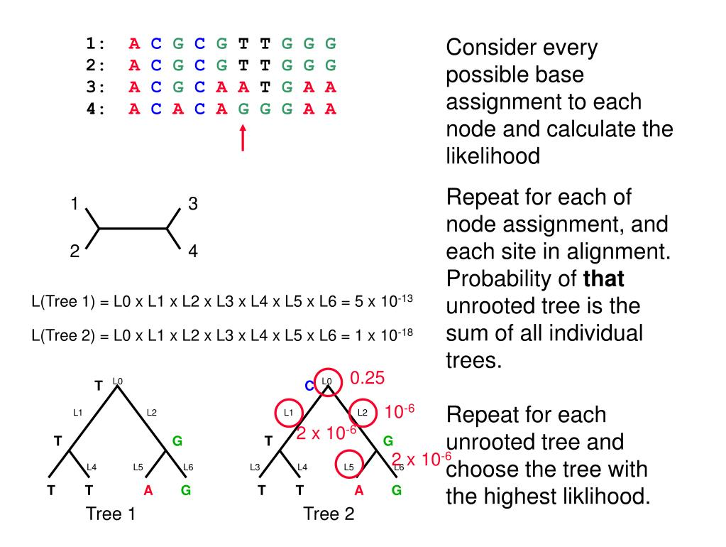 Consider every possible base assignment to each node and calculate the likelihood