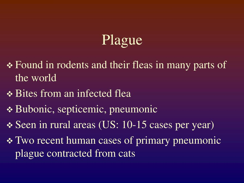 bubonic plague vs smallpox essay Essay on epidemic diseases bubonic ' plague constitutes about three-fourths of all plague cases the great smallpox epidemic in 1950 had killed 25 lakh people.