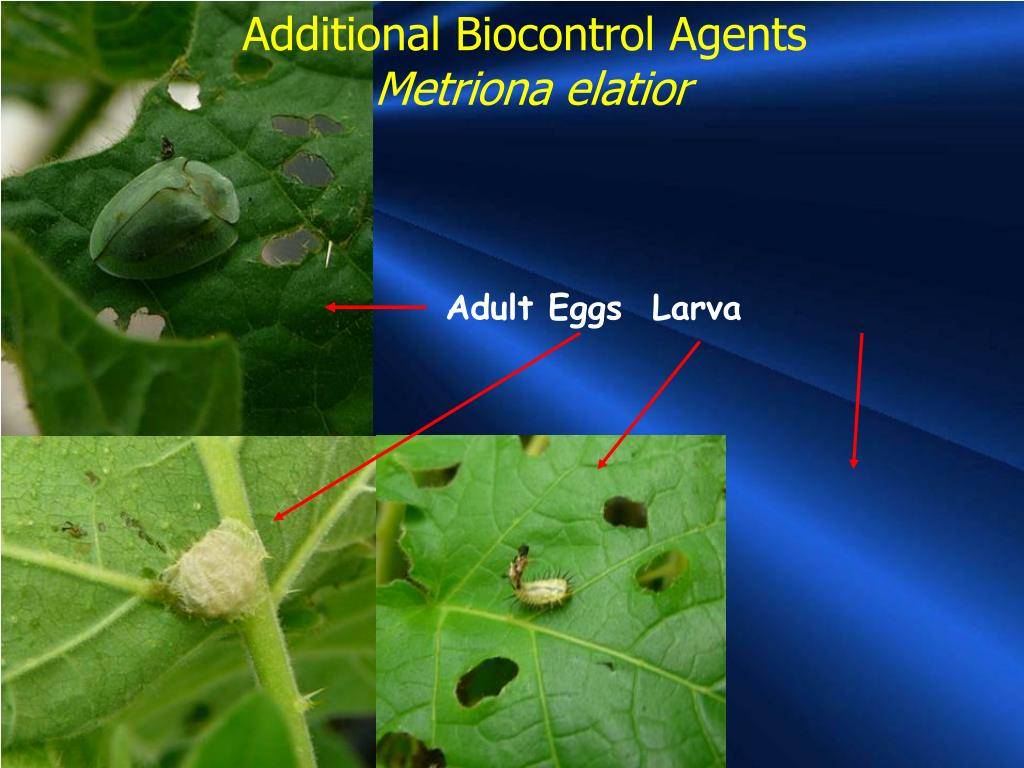 Additional Biocontrol Agents
