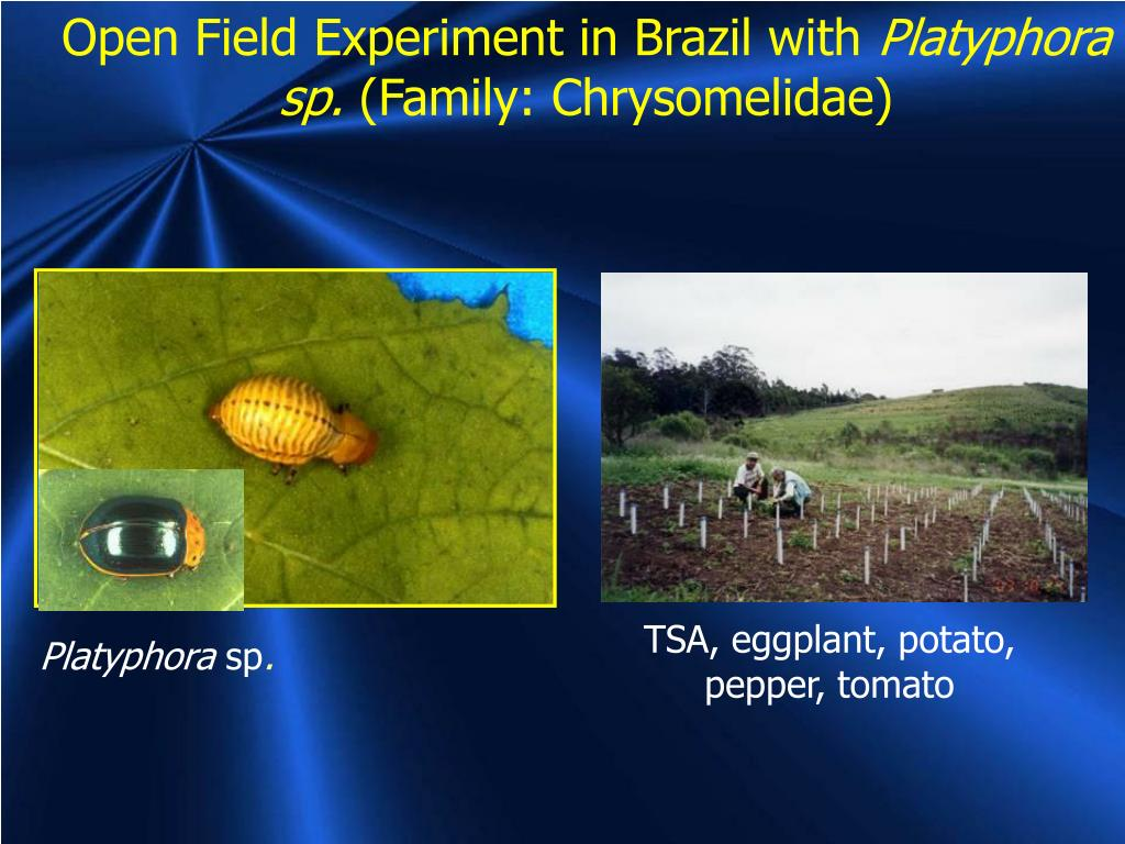 Open Field Experiment in Brazil with