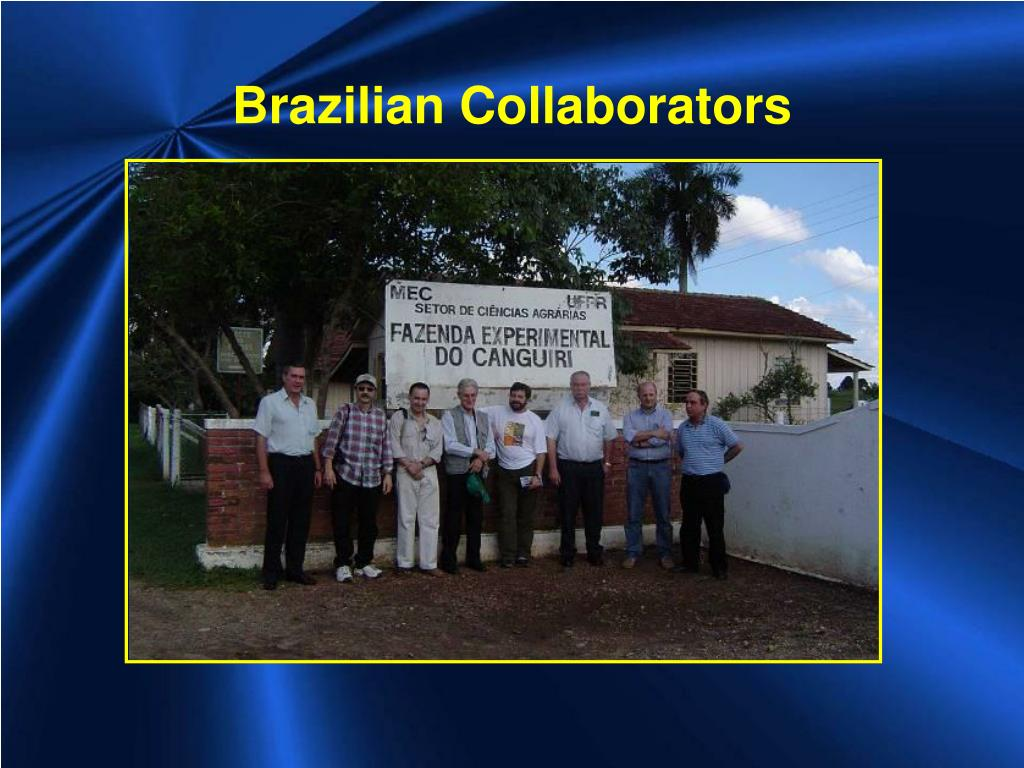 Brazilian Collaborators