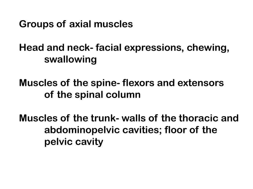 Groups of axial muscles