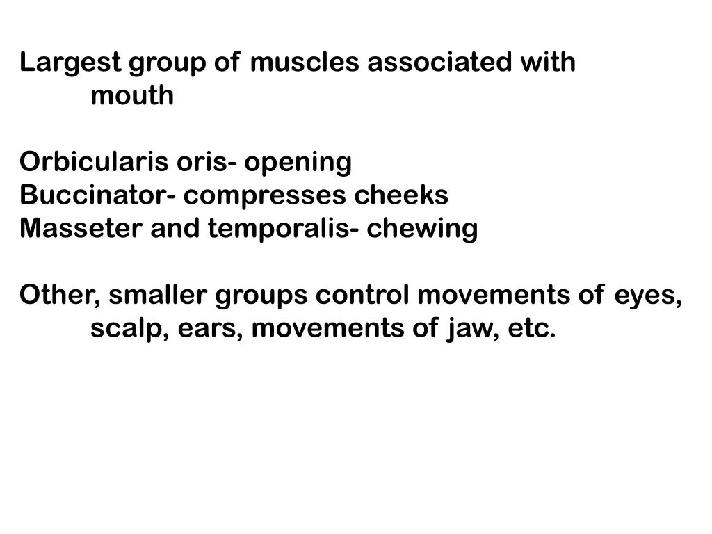 Largest group of muscles associated with