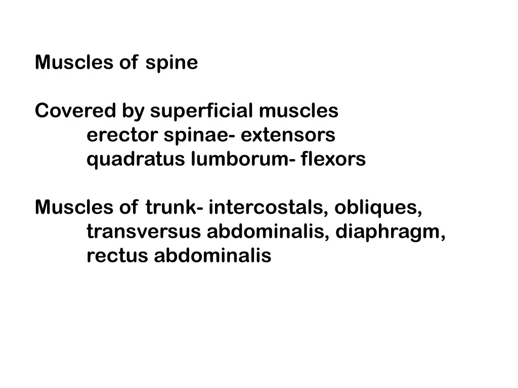 Muscles of spine