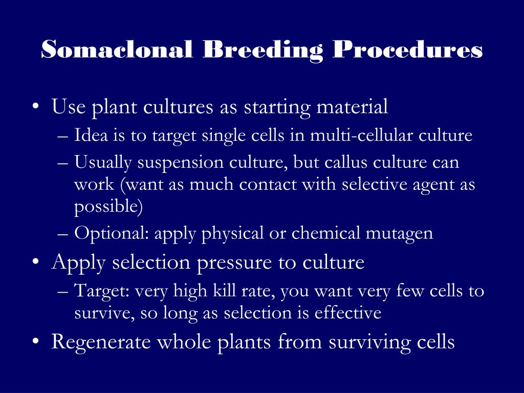 Somaclonal Breeding Procedures