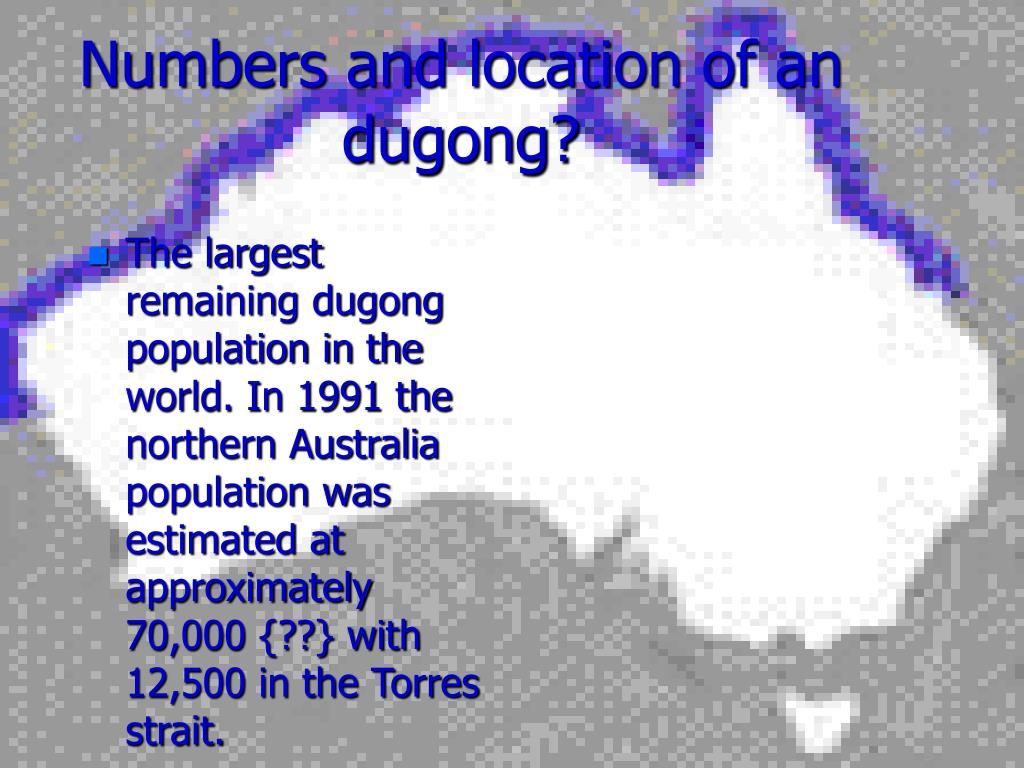 Numbers and location of an dugong?