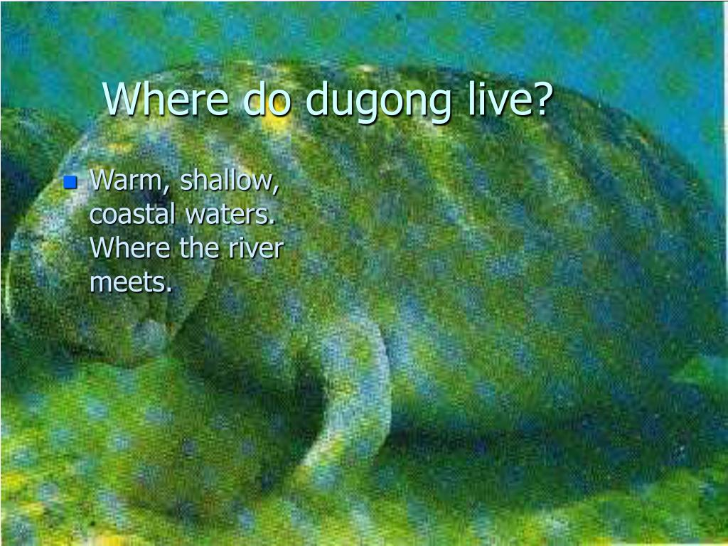 Where do dugong live?