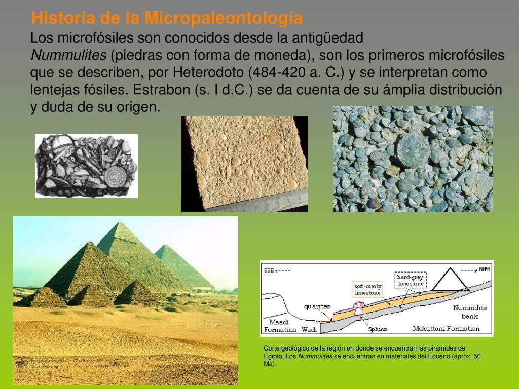 Historia de la Micropaleontología