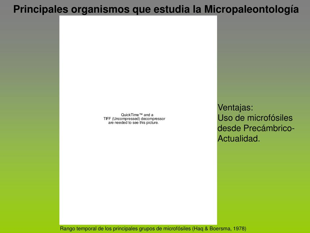 Principales organismos que estudia la Micropaleontología