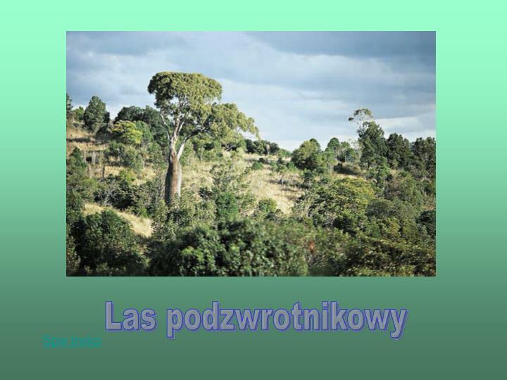 Las podzwrotnikowy