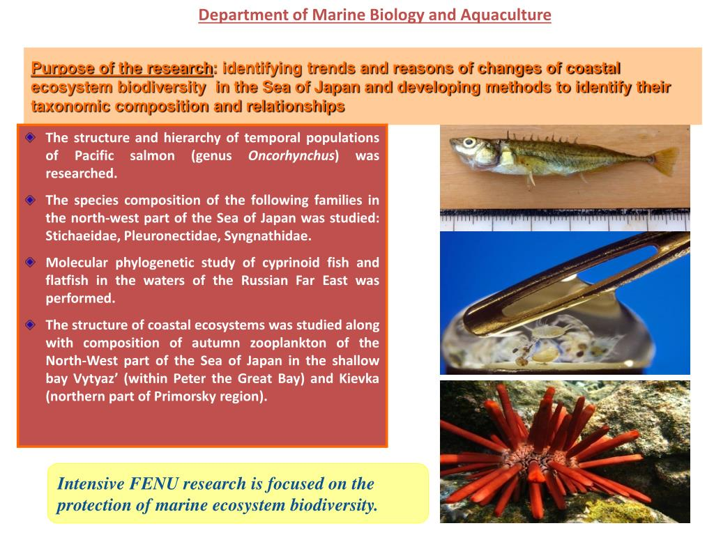 Department of Marine Biology and Aquaculture