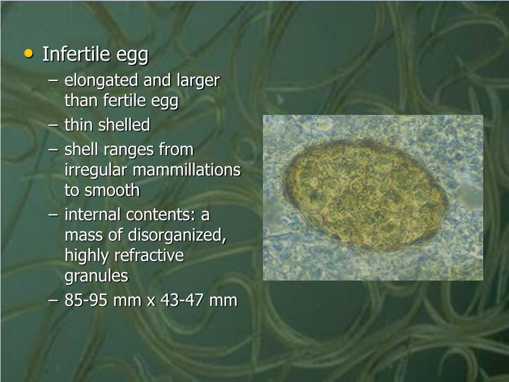 Infertile egg