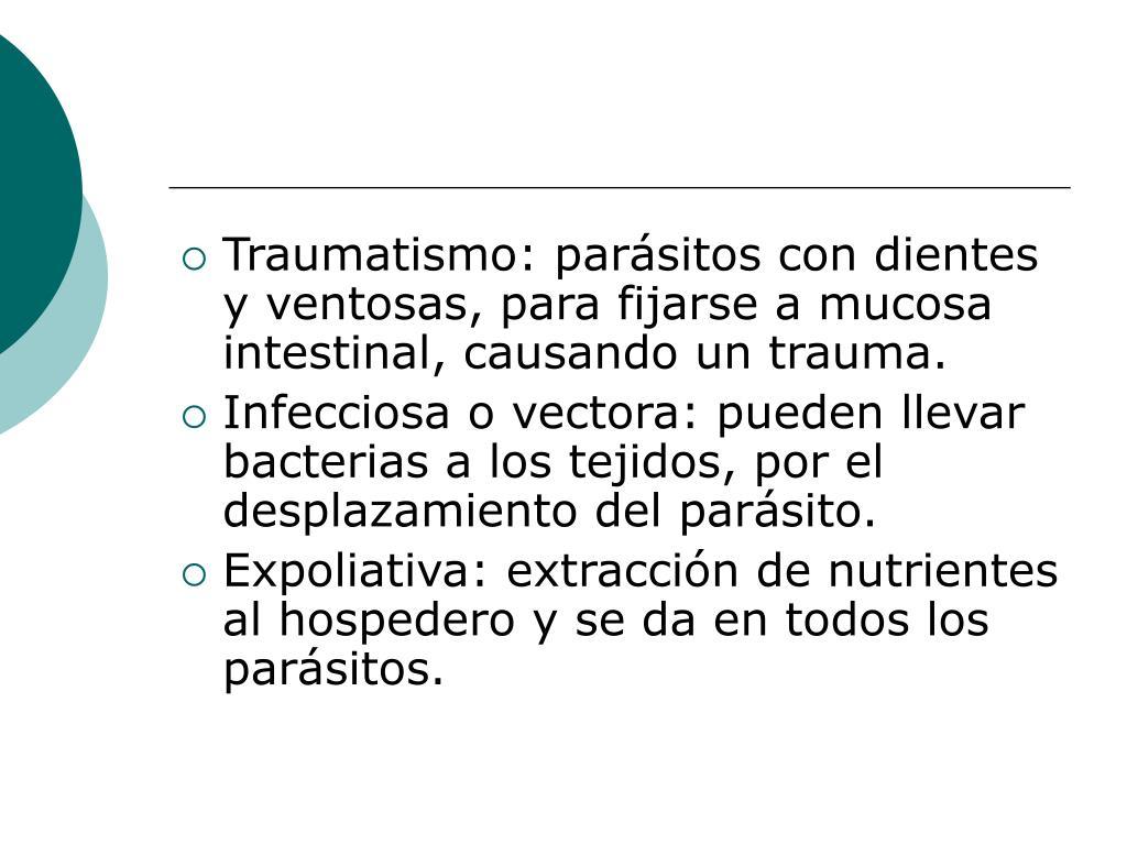 Traumatismo: parásitos con dientes y ventosas, para fijarse a mucosa intestinal, causando un trauma.