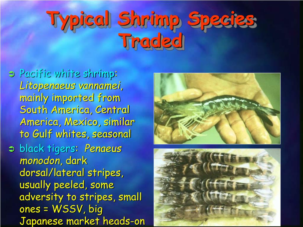 Typical Shrimp Species Traded