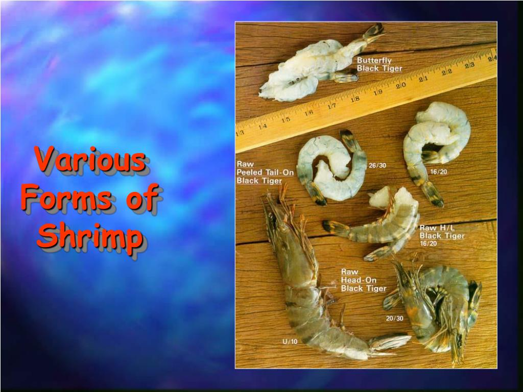 Various Forms of Shrimp