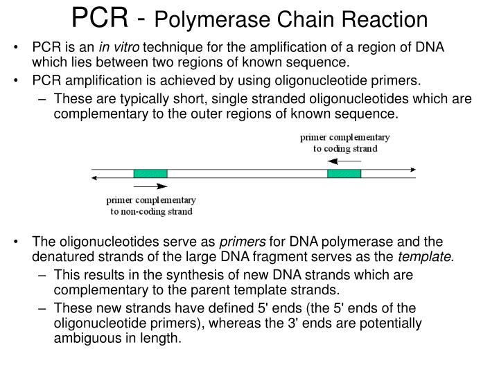 Pcr polymerase chain reaction l.jpg