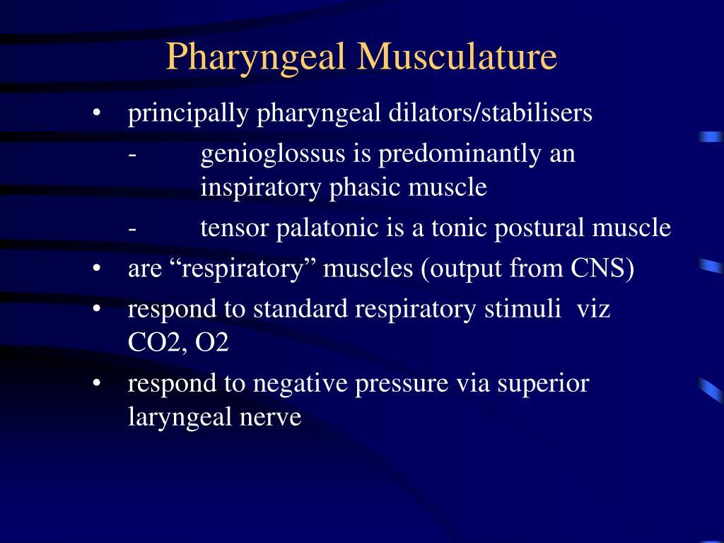 Pharyngeal Musculature