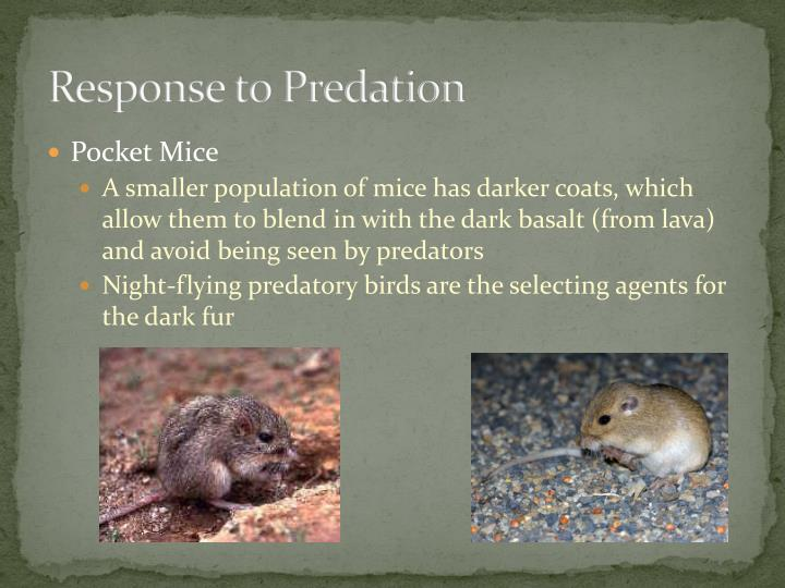 Response to Predation