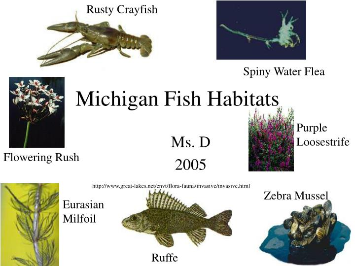 Michigan fish habitats