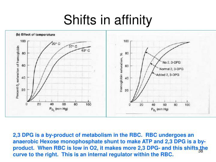 internal and external respiration pdf