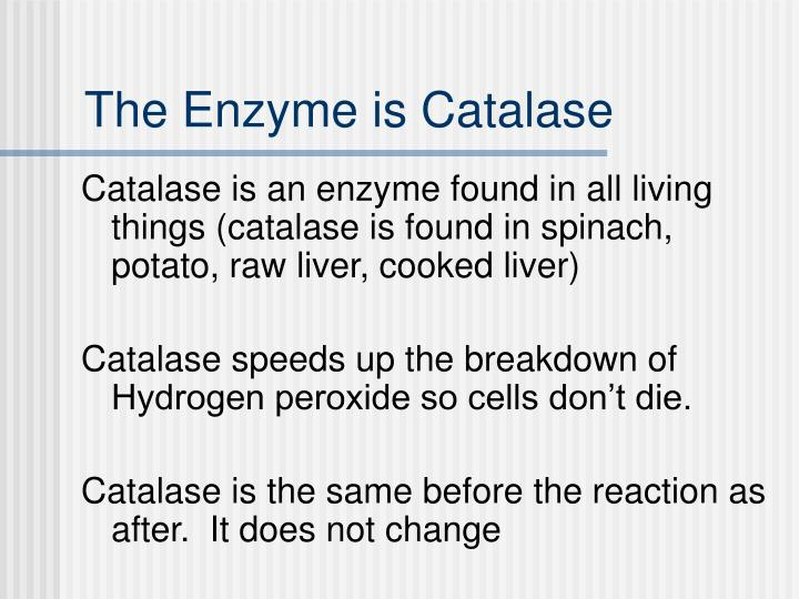 The Enzyme is Catalase