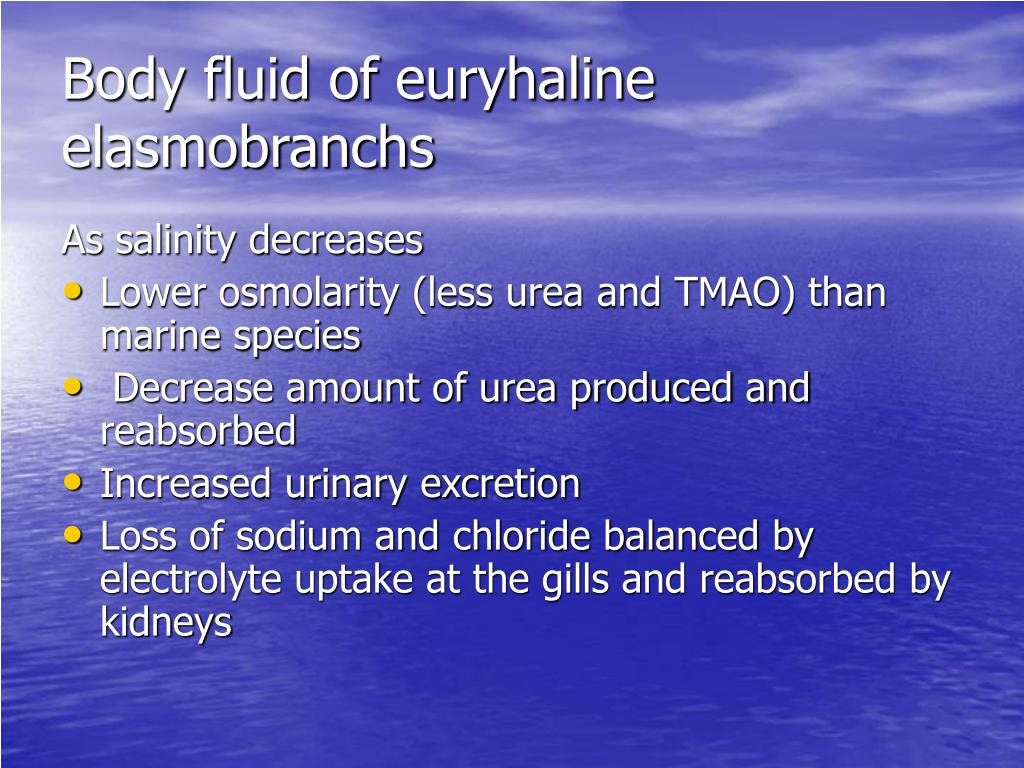 Body fluid of euryhaline elasmobranchs
