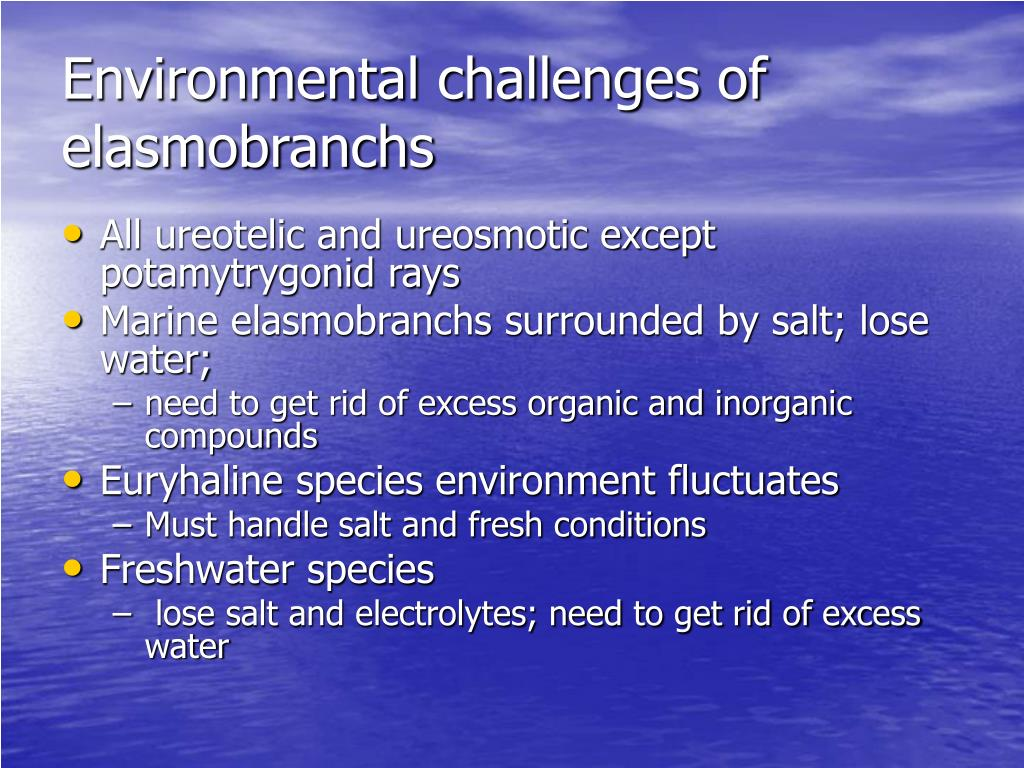 Environmental challenges of elasmobranchs
