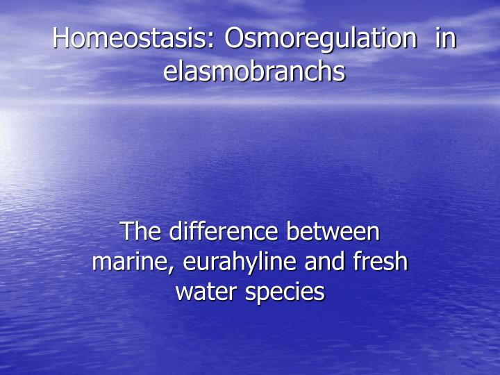 Homeostasis osmoregulation in elasmobranchs