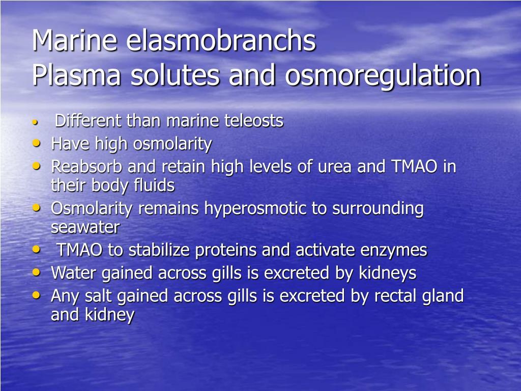 Marine elasmobranchs