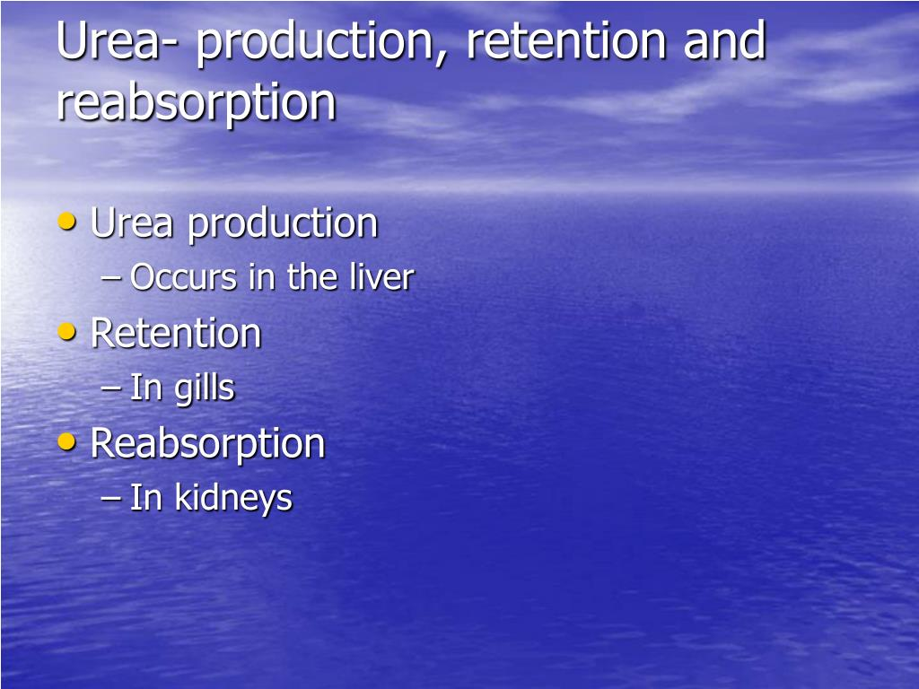 Urea- production, retention and reabsorption