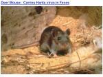 deer mouse carries hanta virus in feces