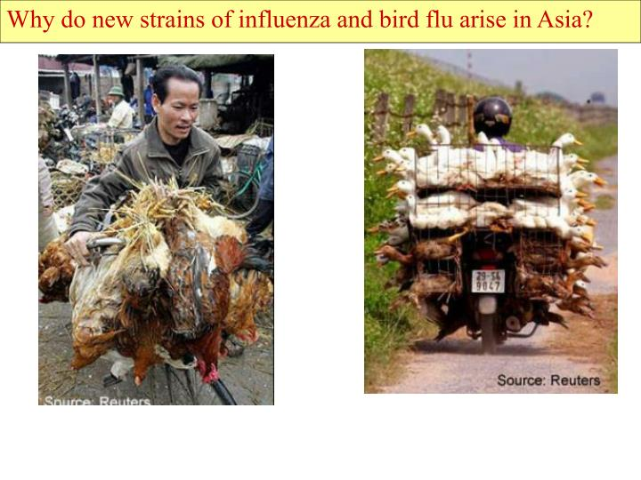 Why do new strains of influenza and bird flu arise in Asia?