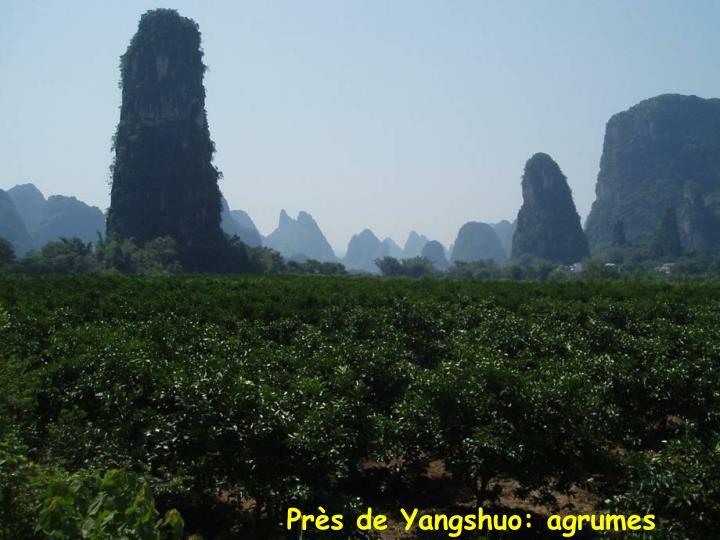 Près de Yangshuo: agrumes