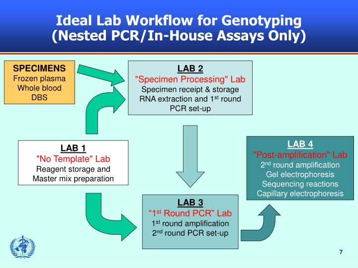 Ideal Lab Workflow for Genotyping