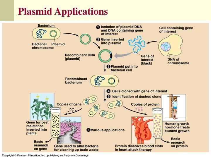 Isolation cloning and translation of plasmid dna