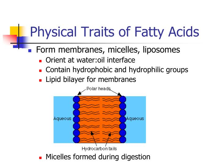 Physical Traits of Fatty Acids