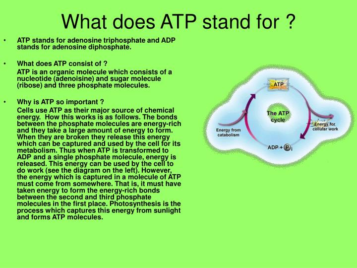 What does rtp stand for
